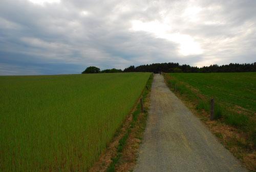 b-k-radweg-bei wesenberg