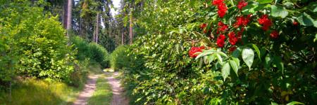 bober-radweg-bei-wlen